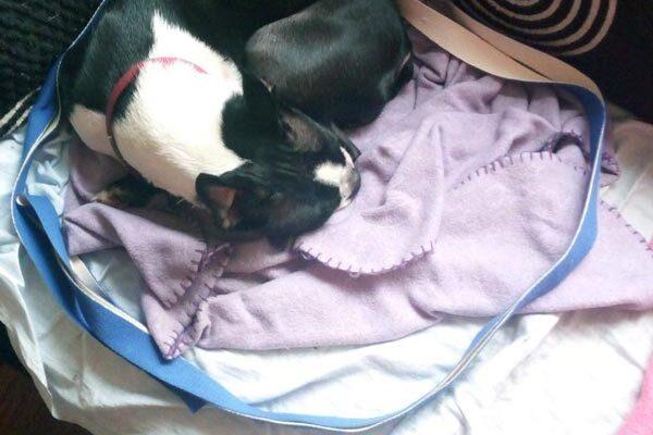 Pet dog Shaitana sleeping in the centre of a Quantum Loop circle geometric for enhanced life force energy flow.