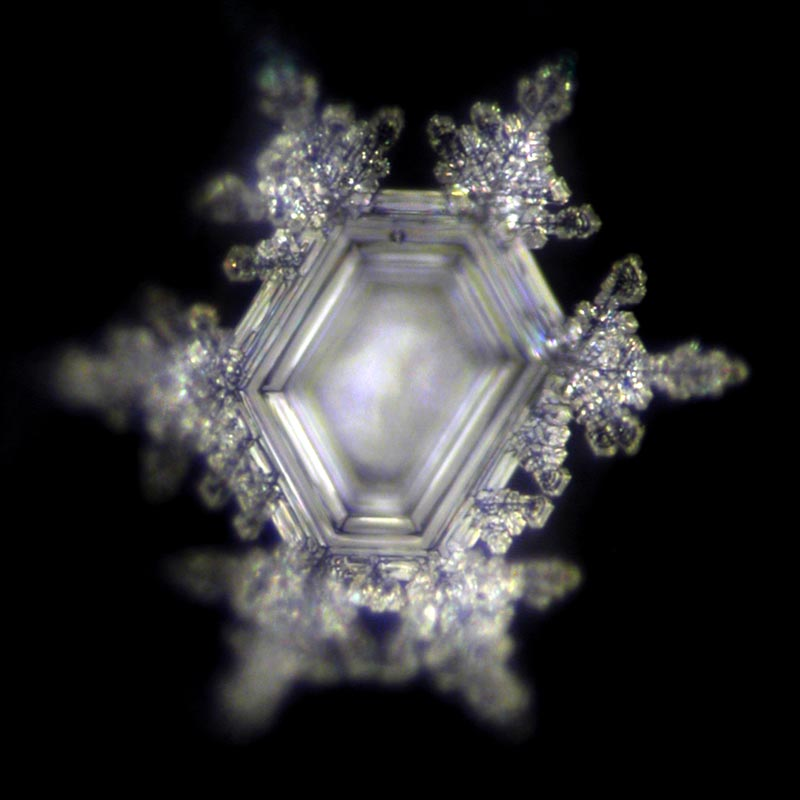 VITALITY - AFTER :: Water Crystals Research