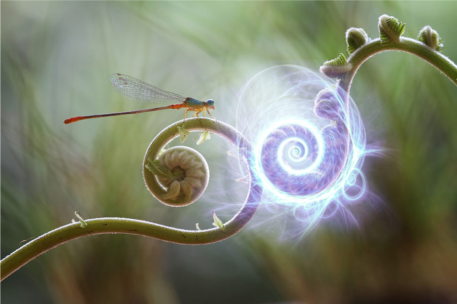 Dragonfly on Fern with Blue Life Force Energy Light Spiral